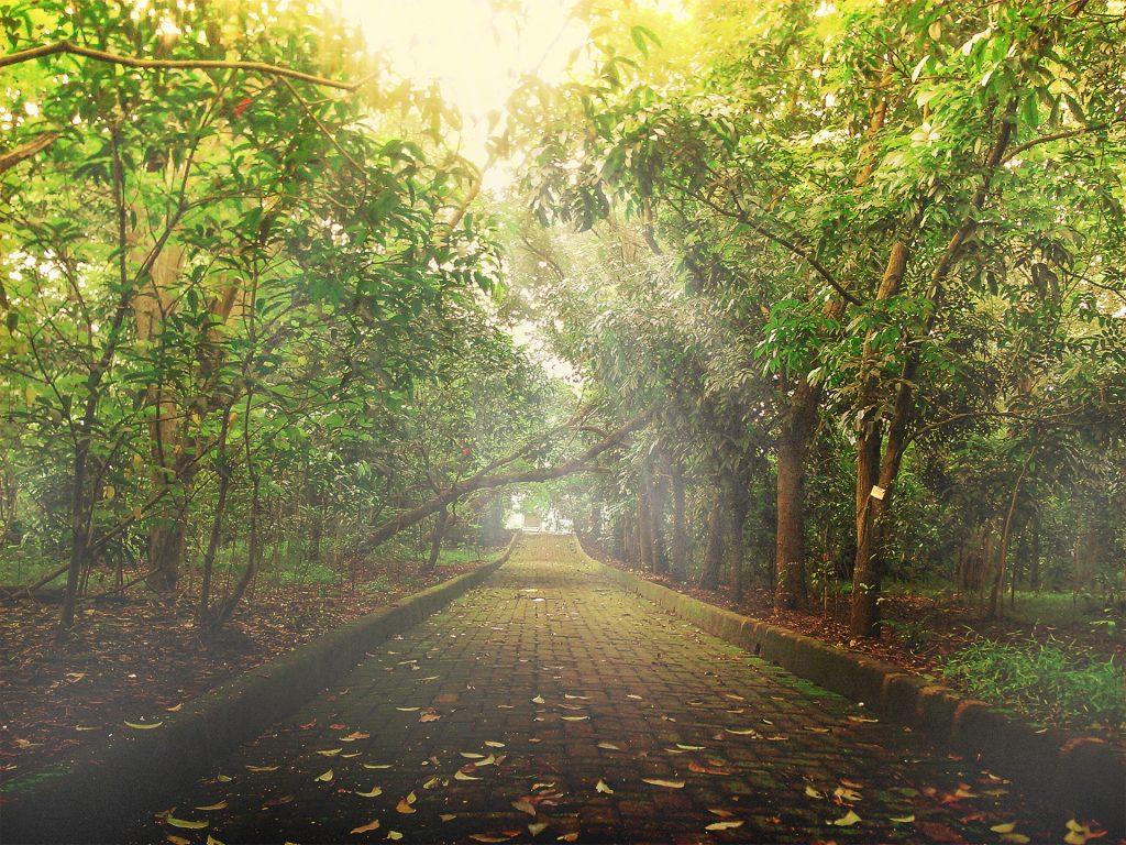 green-forest-14517984748Aq